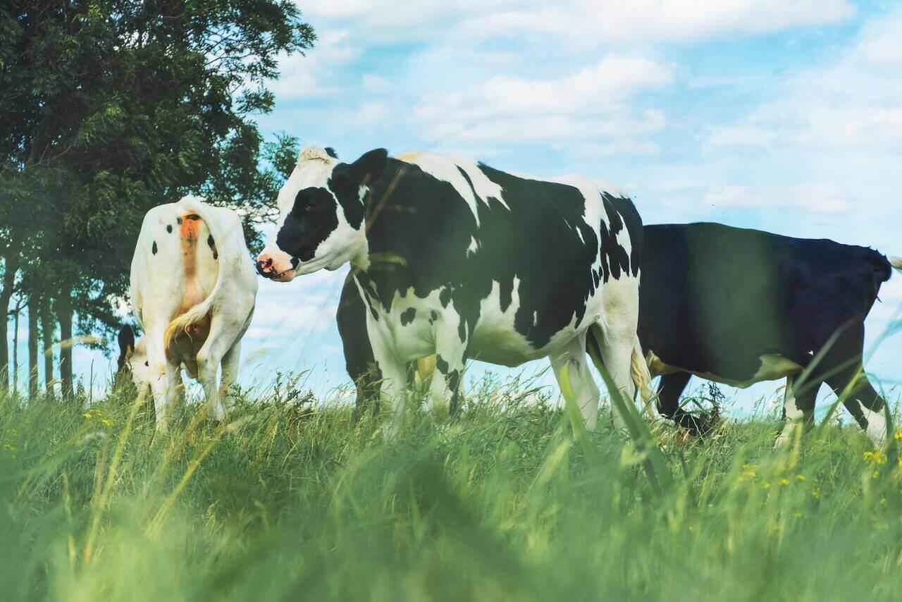 vietnam dairy product industry market